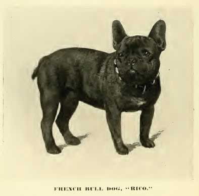 historical frenchie photo