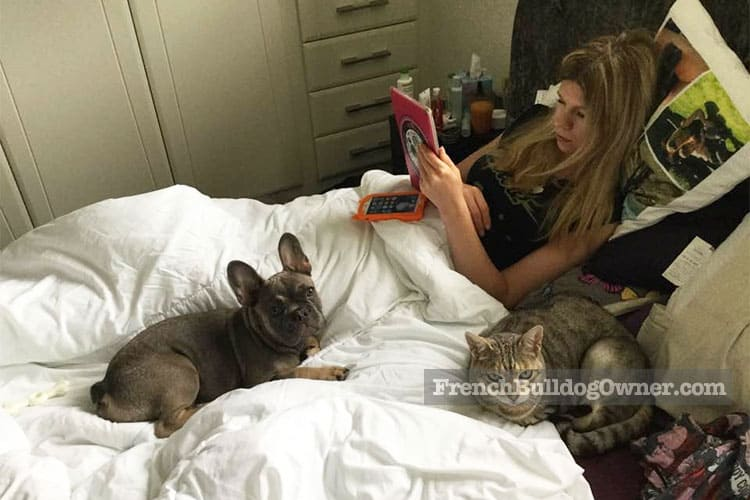 French bulldog and cat on the bed