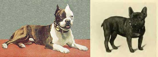Historical photos of both breeds