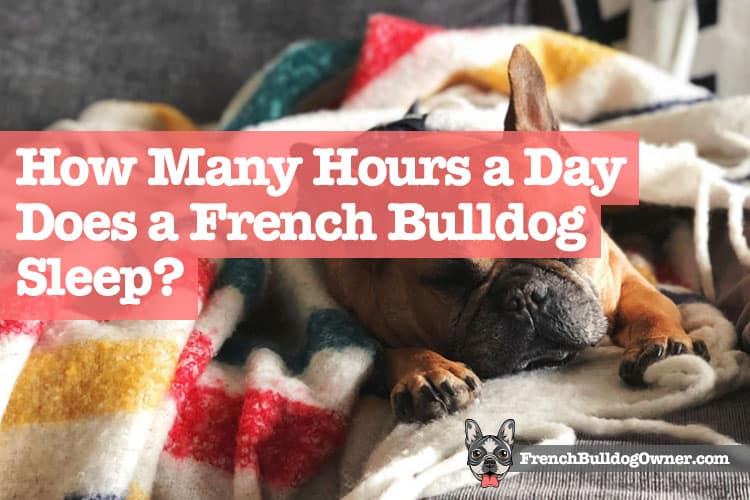 How Many Hours a Day Does a French Bulldog Sleep