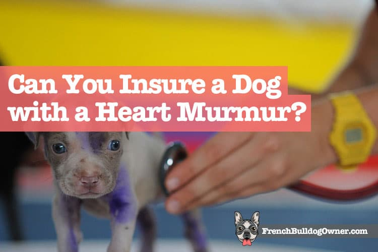 Can You Insure a Dog with a Heart Murmur
