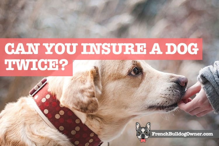 Can You Insure a Dog Twice