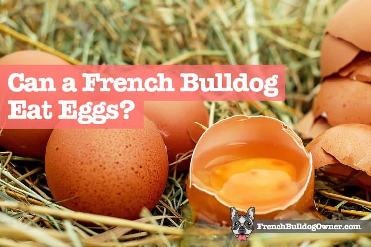 Can a French bulldog eat scrambled eggs