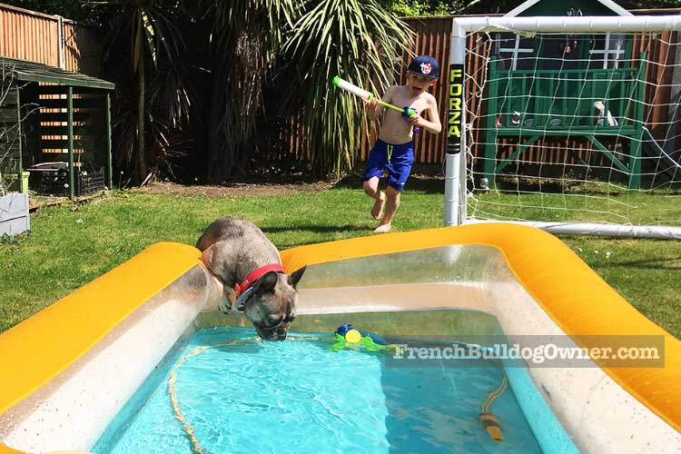 how to prevent a French Bulldog from overheating