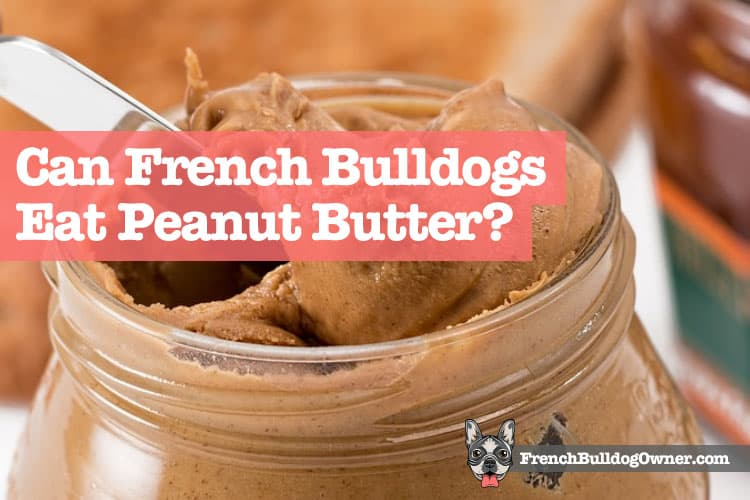 Can French Bulldogs Eat Peanut Butter