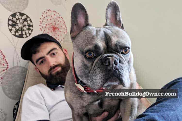 can a french bulldog live in an apartment