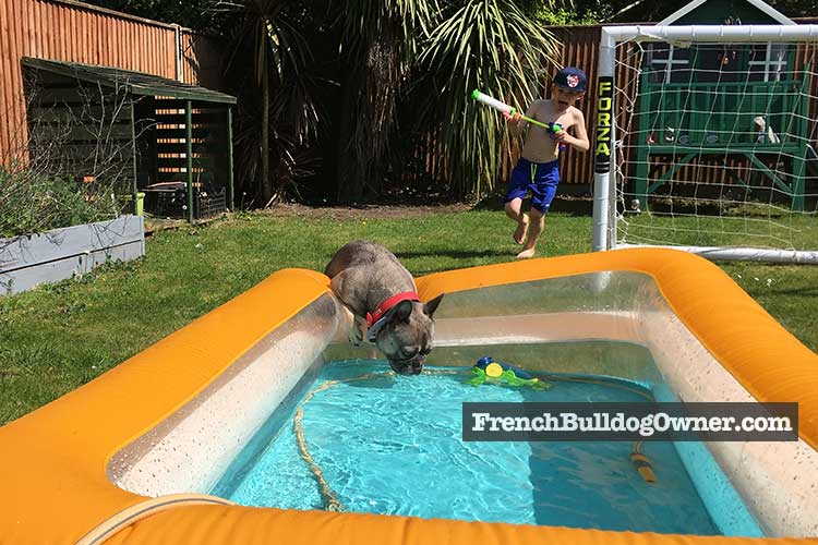 Frenchie paddling pool