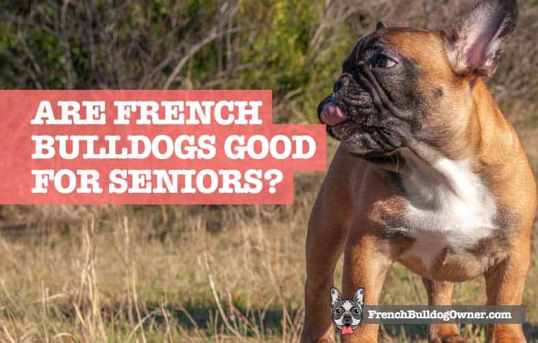 Are French Bulldogs Good for Seniors