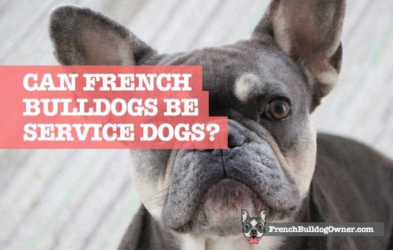Do French Bulldogs make good service dogs
