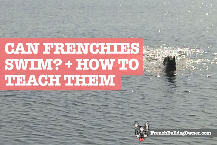 can french bulldogs swim