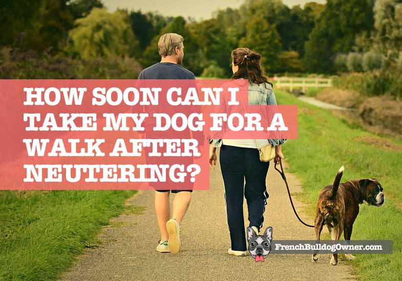How Soon Can I Take My Dog for a Walk After Neutering