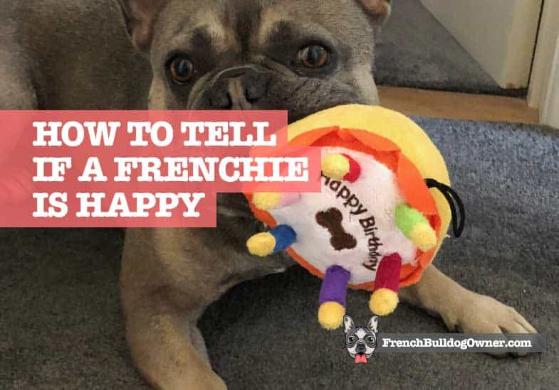 how can I tell if my French Bulldog is happy
