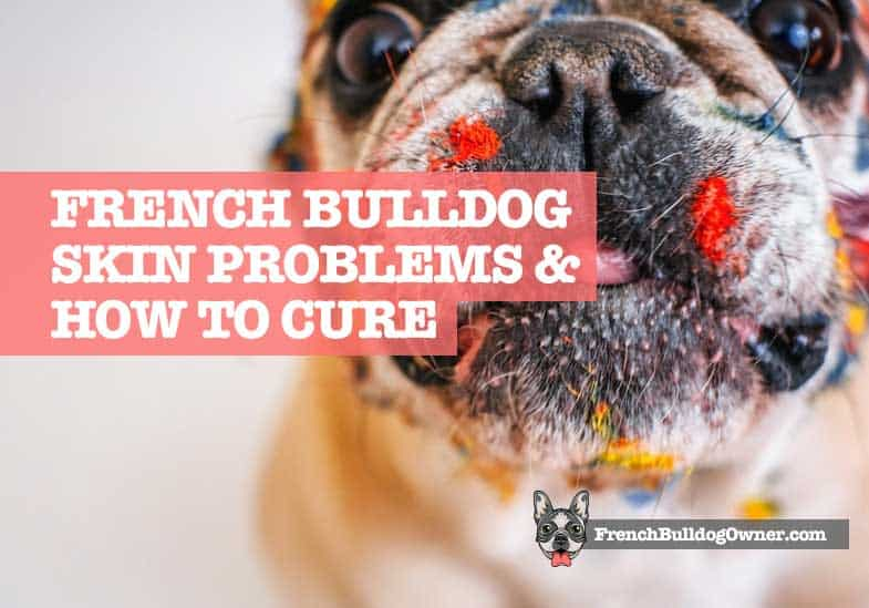 french bulldog skin bumps