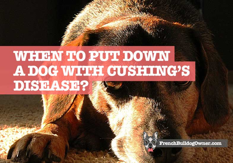 when to put down a dog with cushings disease
