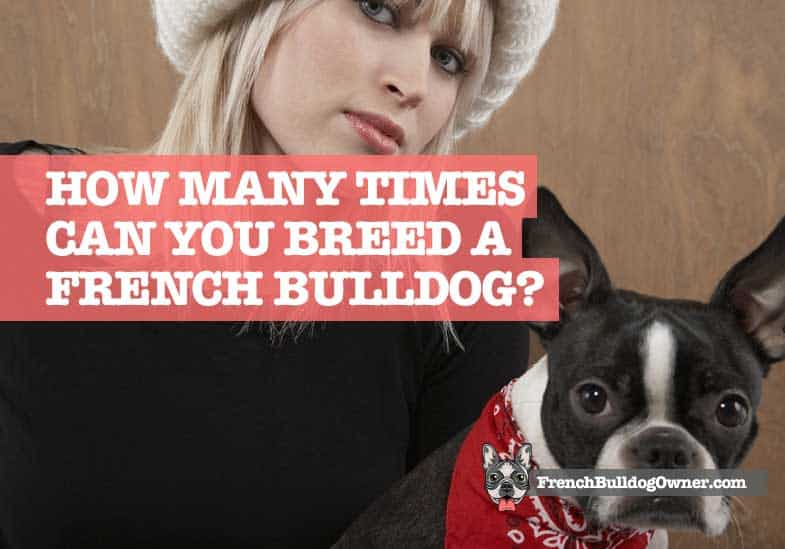 How Many Times Can You Breed A French Bulldog Breeding