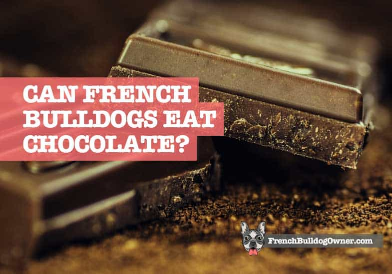 can french bulldogs eat chocolate