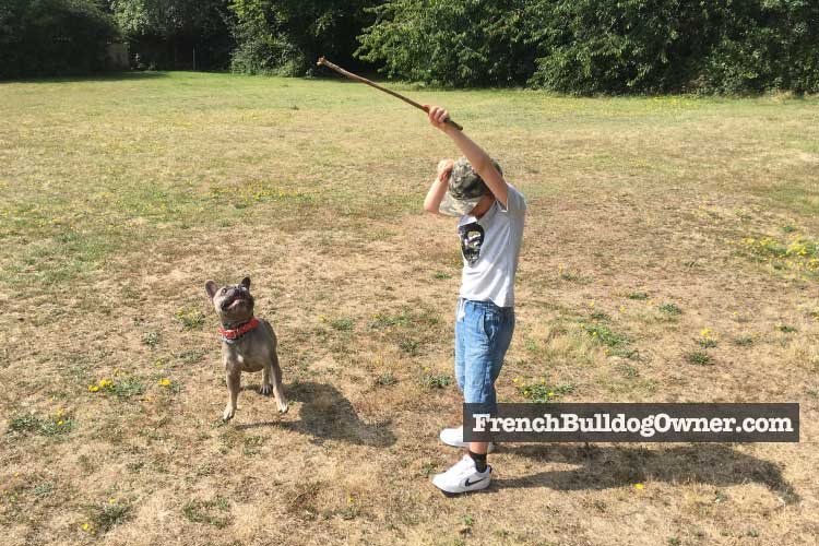 frenchies can keep children fit and active
