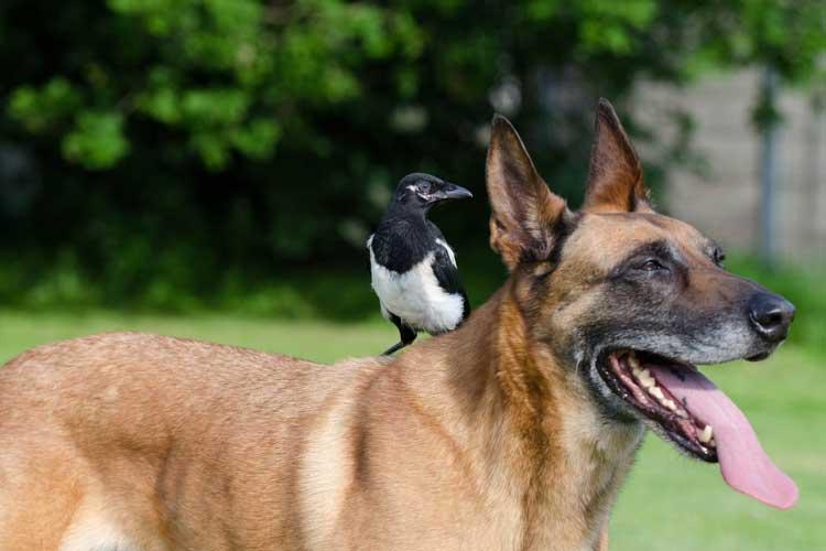 stop dog killing birds