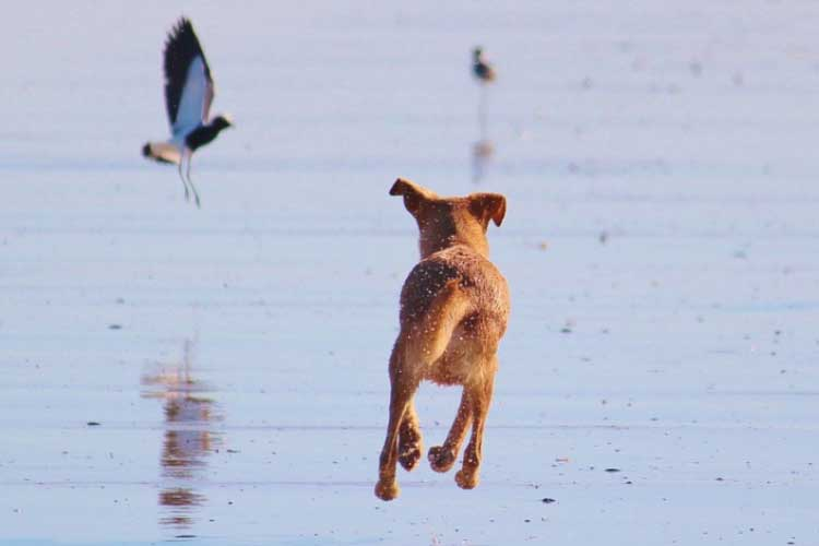 what to do when dog hurts birds