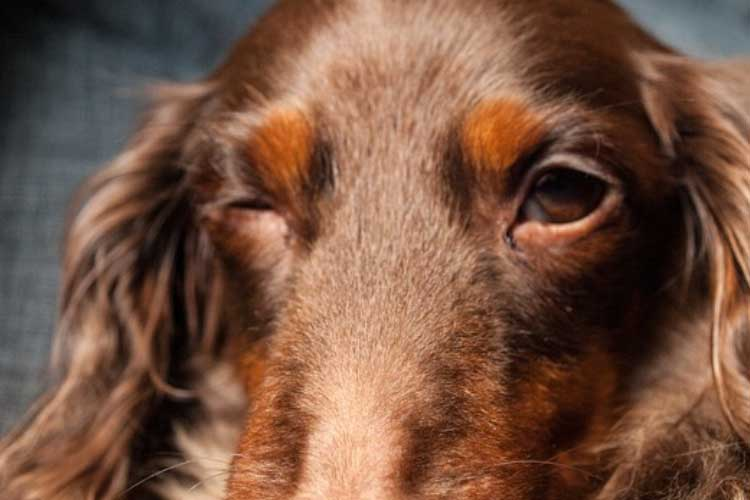 what does it mean when a dog blinks at you