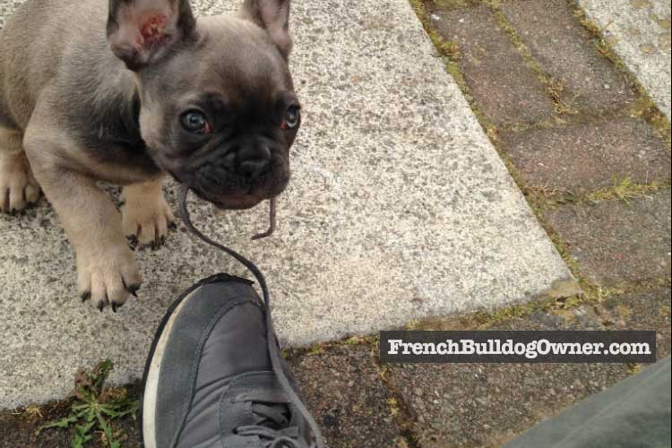 biting feet