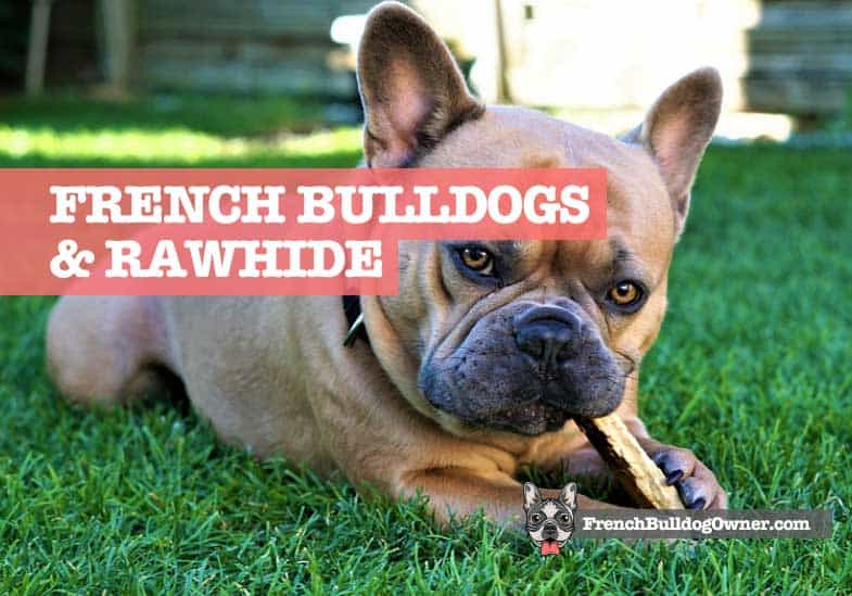 can French bulldogs eat rawhide