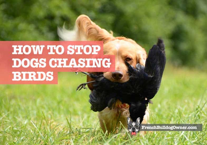 How to Stop My Dog Chasing Birds