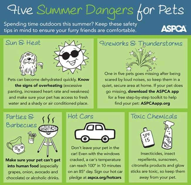 Summer dangers for dogs