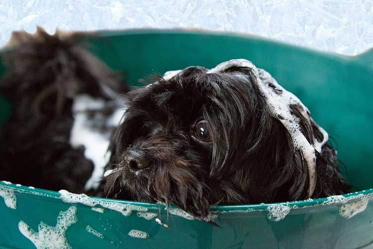 dog groomers salary
