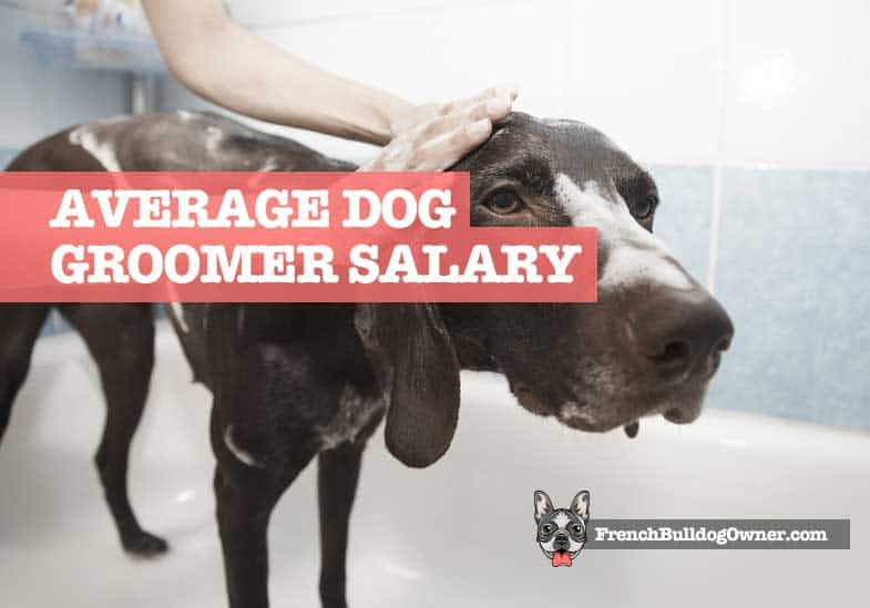 How much do dog groomers make a year