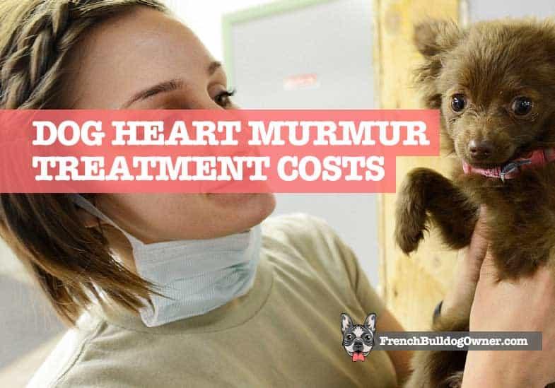 Dog Heart Murmur Treatment Cost