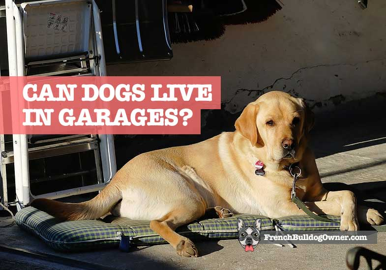 can dogs live in a garage