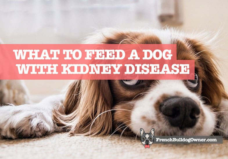 what to feed a dog with kidney disease