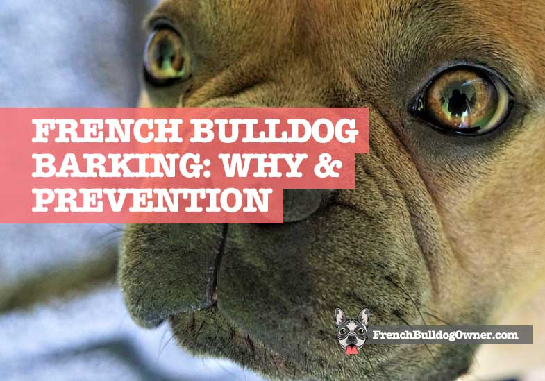 do French Bulldogs bark