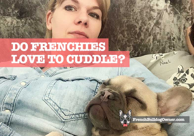 do french bulldogs like to cuddle