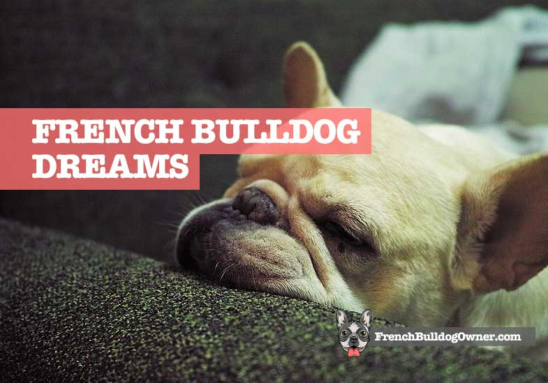 what do french bulldogs dream about