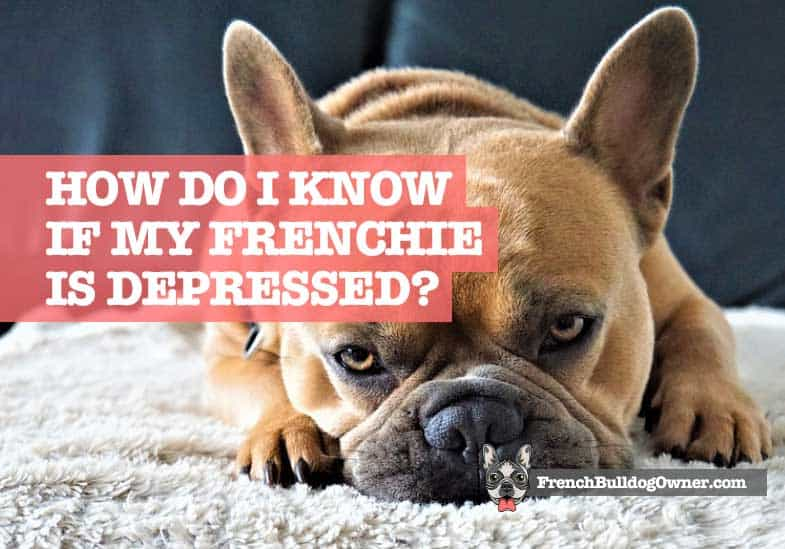 how do I know if my French bulldog is depressed