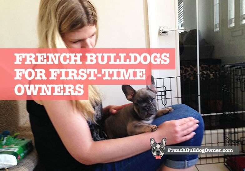 Are French Bulldogs Good for First Time Owners