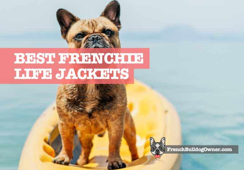 best french bulldog life jackets