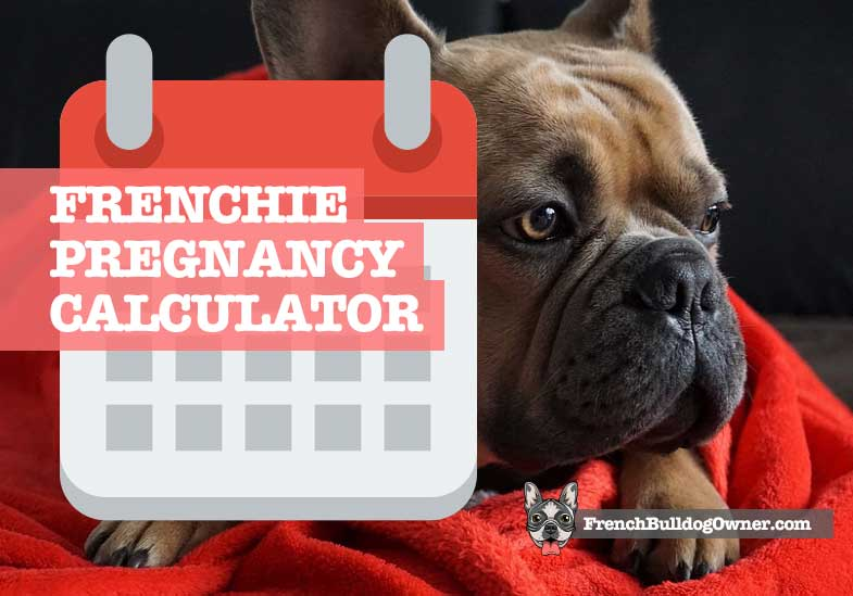 french Bulldog gestation calculator