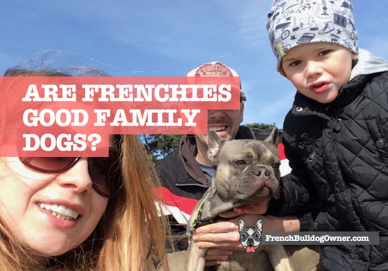 Are French Bulldogs Good Family Dogs