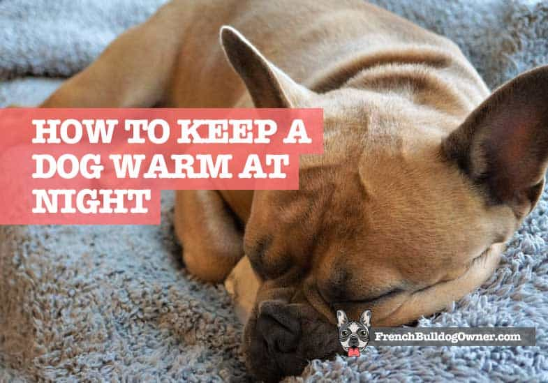 How to Keep a Dog Warm at Night