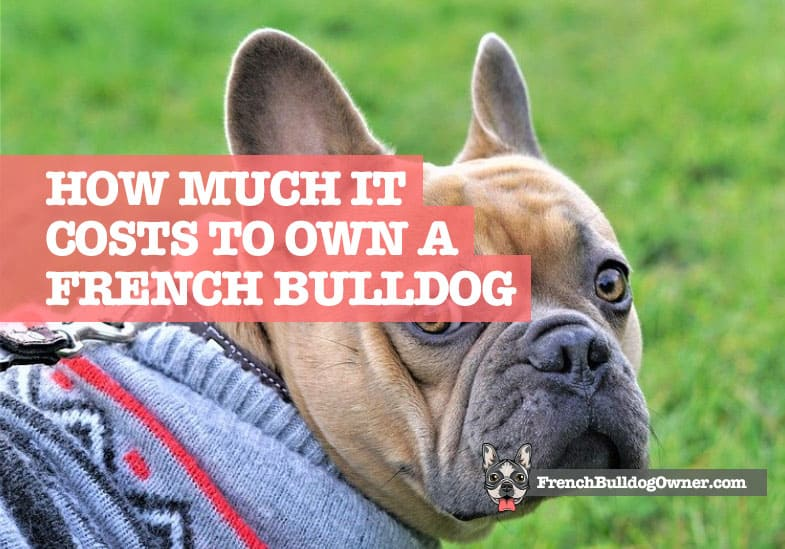 how much does it cost to have a French Bulldog
