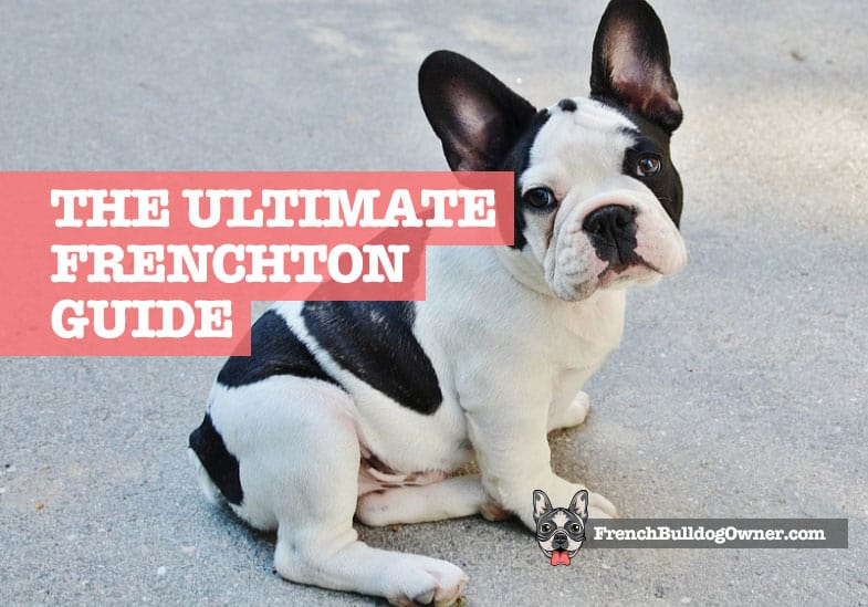 what is a frenchton dog