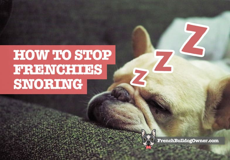 how to stop a french bulldog snoring