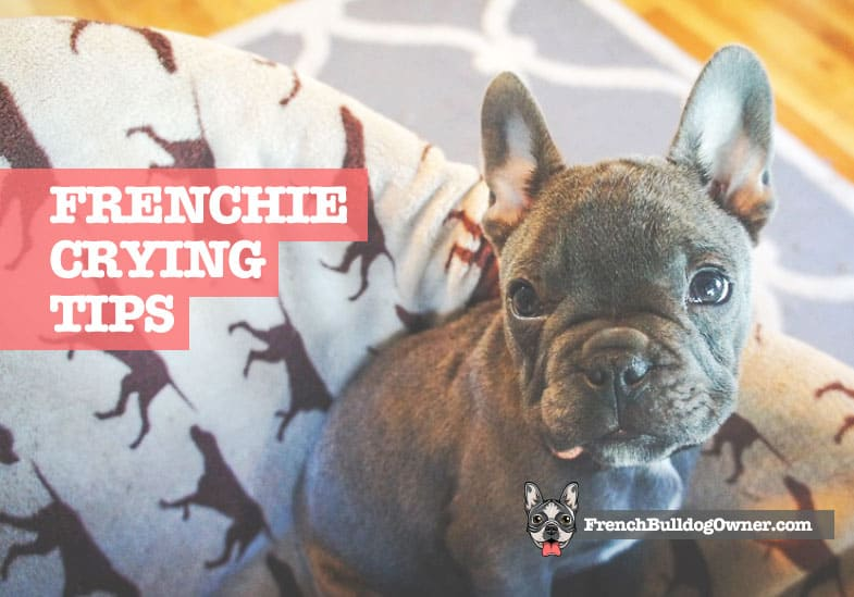 french bulldog crying in crate