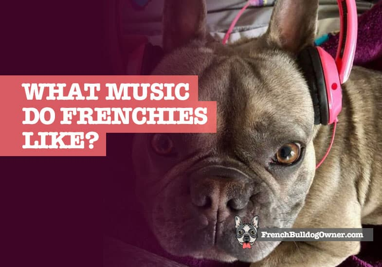 What Music Do French Bulldogs Like