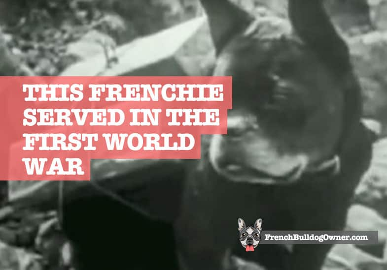 french bulldog world war 1