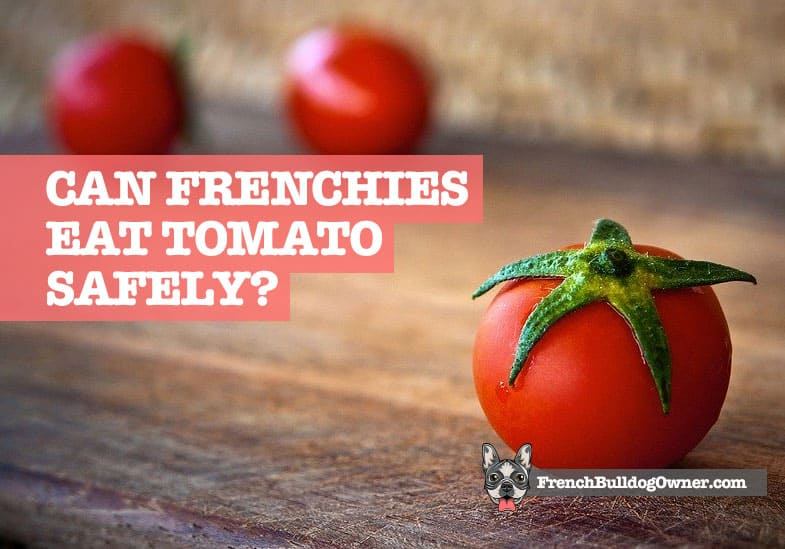 can french bulldogs eat tomatoes