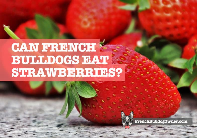 can french bulldogs eat strawberries